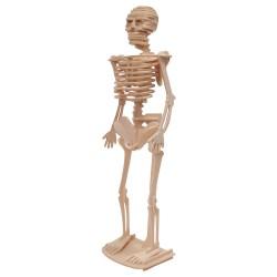IMP-EX Drevený model natur - Kostra človeka