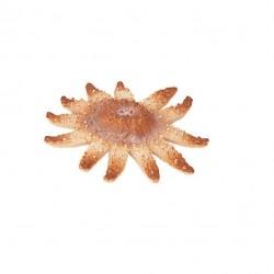 Bullyland morská hviezdica figúrka